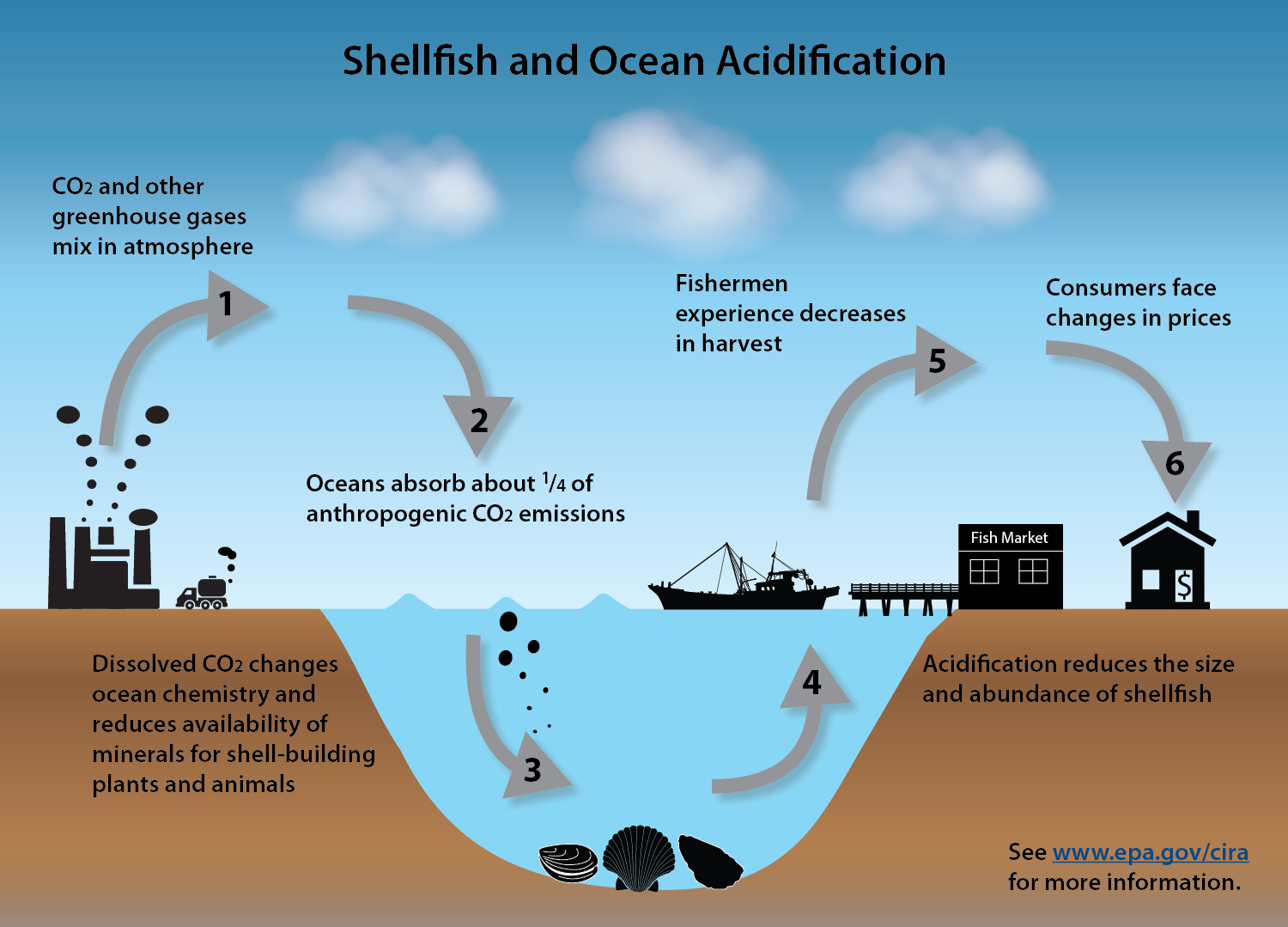Increasing Co2 Emissions Cause Our Oceans To Become More Acidic