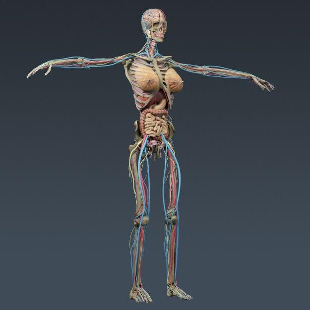 Anatomia Dental Software 3d - staffcomp