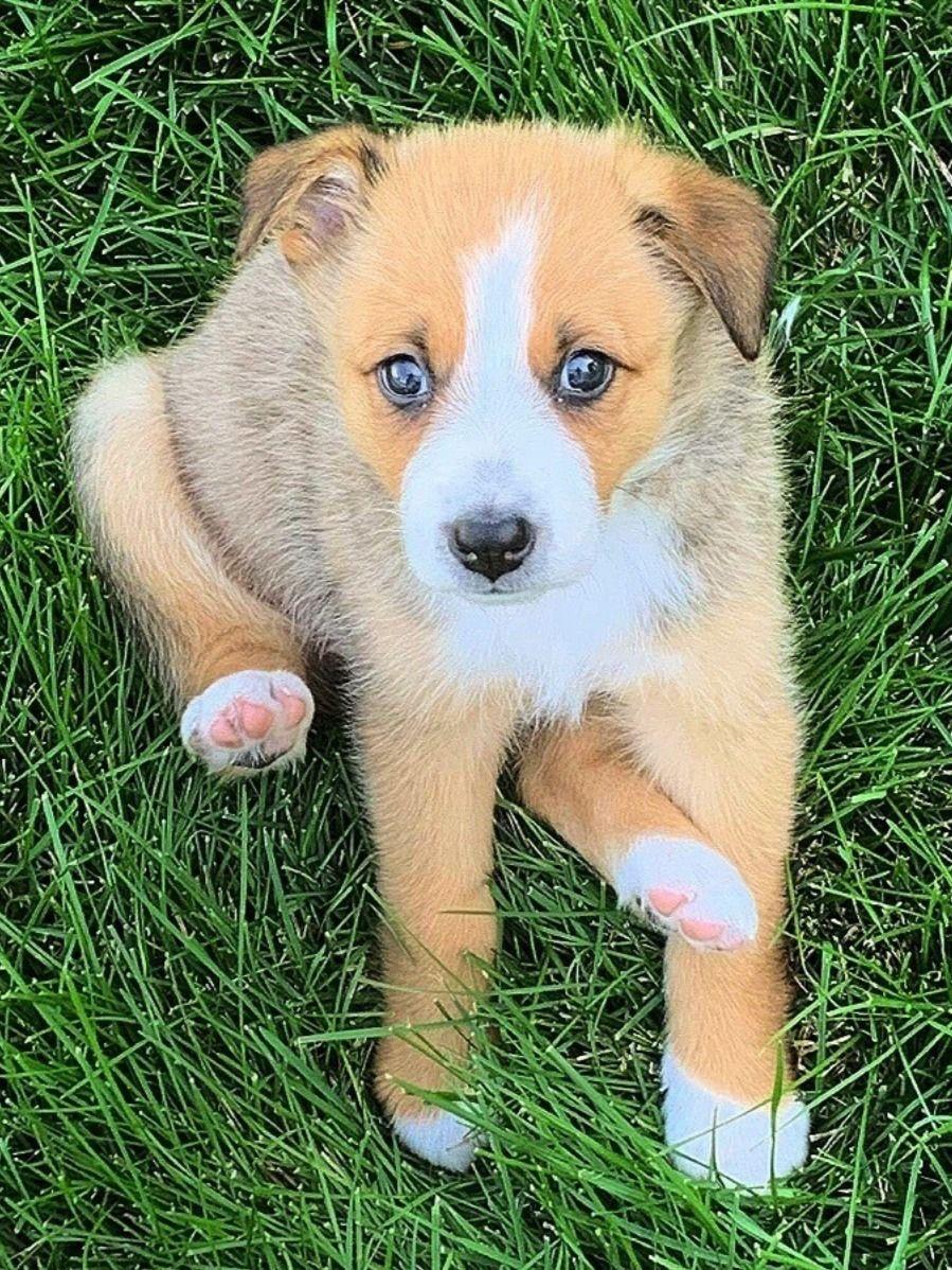 Adopt a puppy pet adoption pets