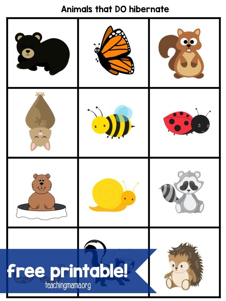 animals that hibernate in winter clipart