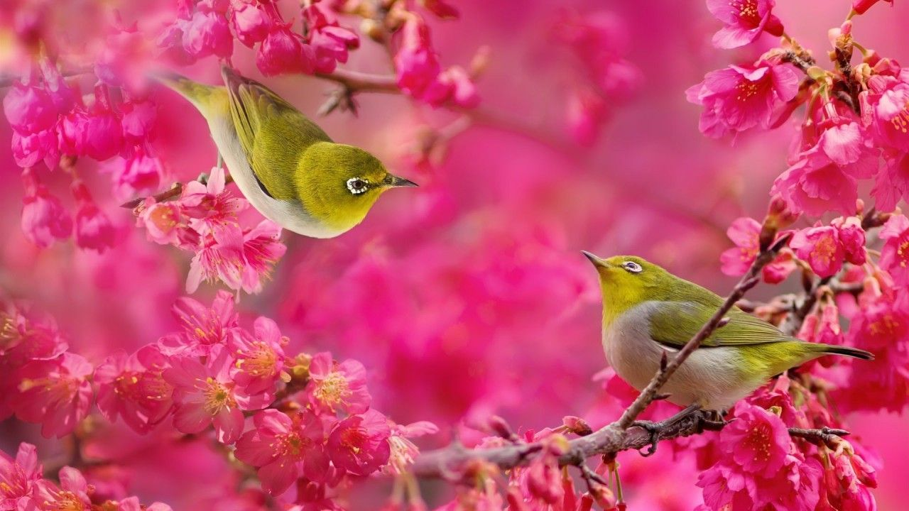 birds and flowers Birds Wallpapers Live HD Wallpaper
