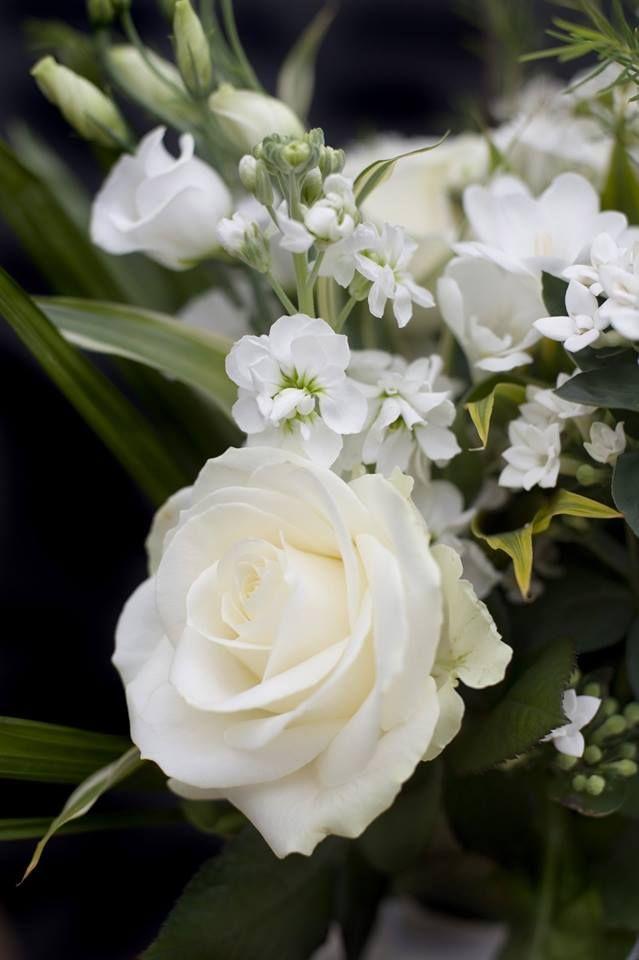 читателю картинки цветы белого цвета зрелого