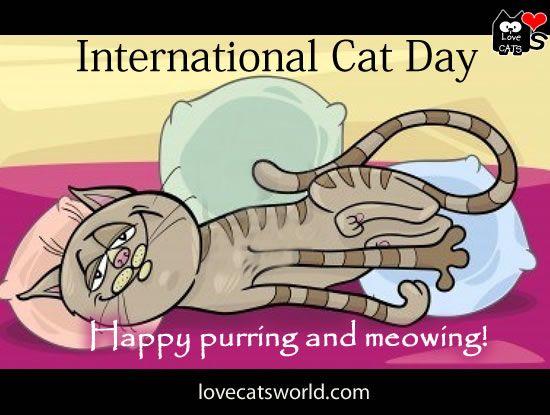 international cat day - photo #18