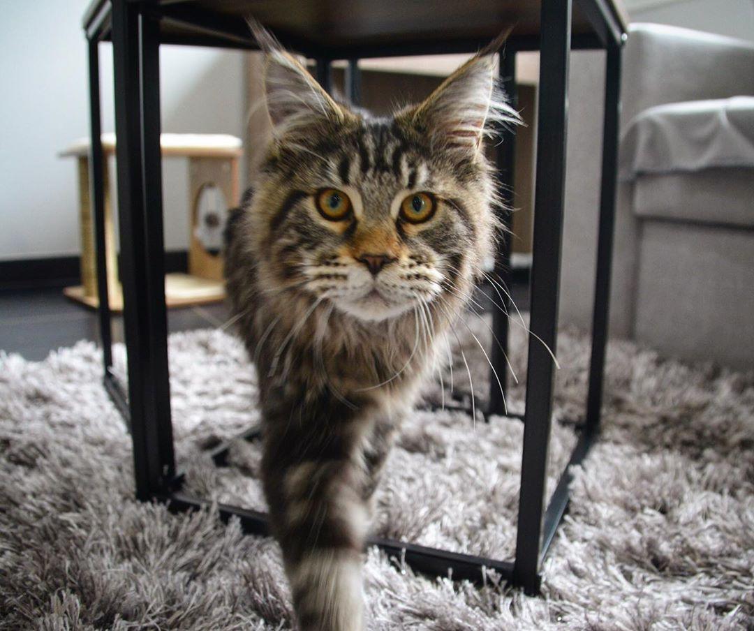 Pin On Catsofinstagram