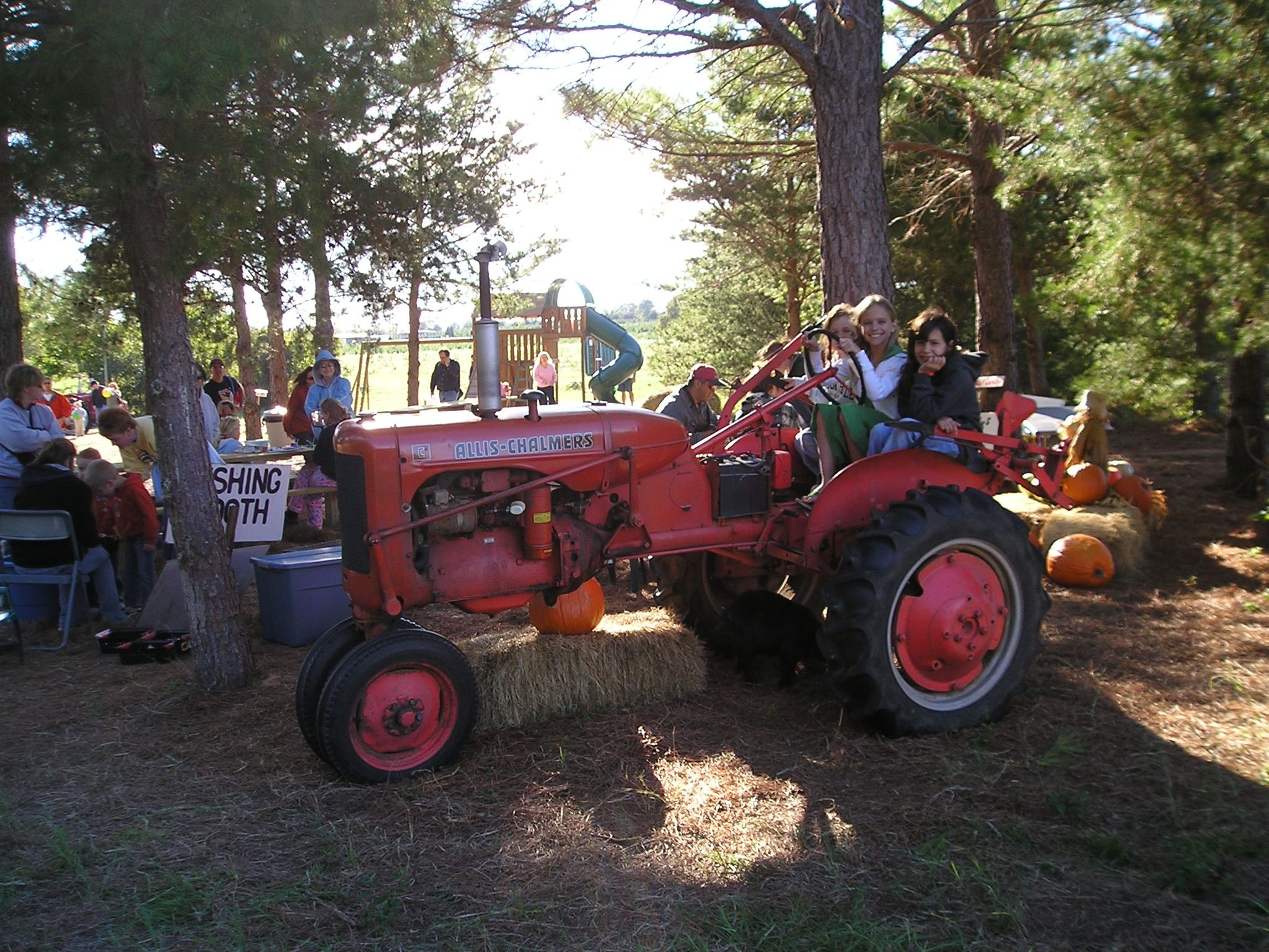 Pumpkin Festival Christmas Tree Farm Tree Farms Pumpkin Festival