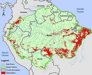 17 Of The Amazon Forest Has Been Lost In The Last 50 Years