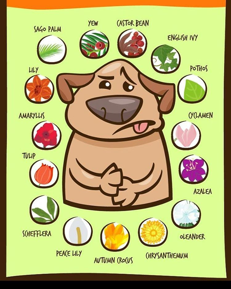 16 Likes 1 Comments Bow Wow Bungalow Bowwowbungalow On Instagram All Of These Are Poisonous To Your Pets Check And See W Pets Dog Care Dog Health Tips