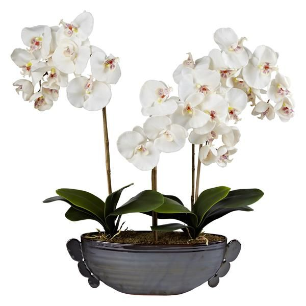 Orchid display from john lewis i love orchids pinterest john orchid display from john lewis artificial mightylinksfo
