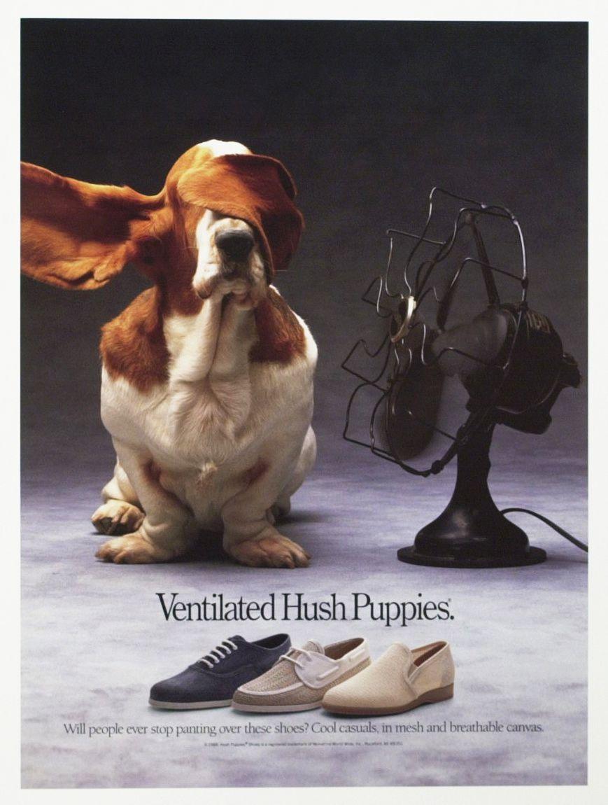 Fallon Mcelligott Basset Hound Beagle Hound Puppies Basset Hound Dog