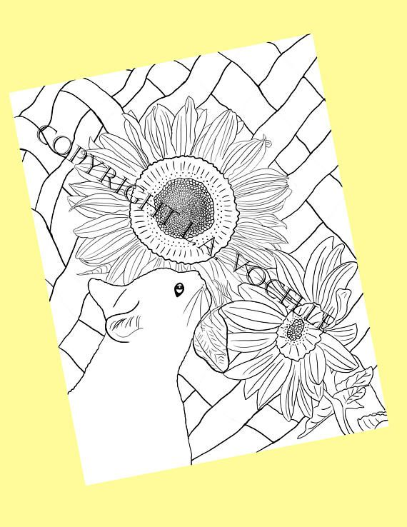 Cat Coloring Pages Adult Coloring Book Cat Coloring Kitty