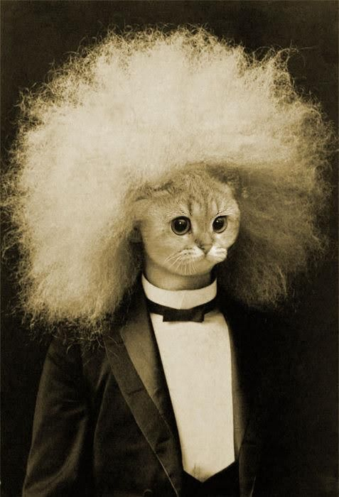 now that's one cool cat...