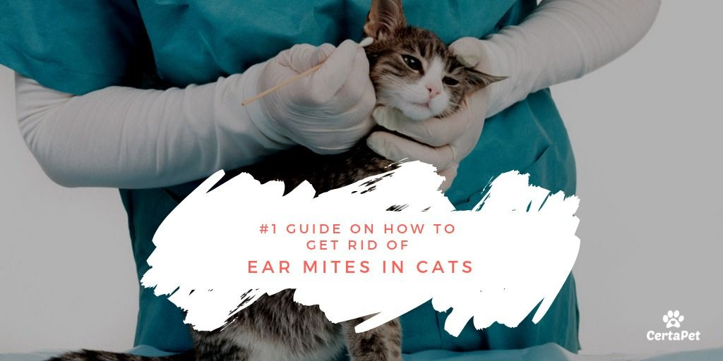 1 Guide On How To Get Rid Of Ear Mites In Cats Certapet Certapet Clean Cat Ears Cat Ear Mites