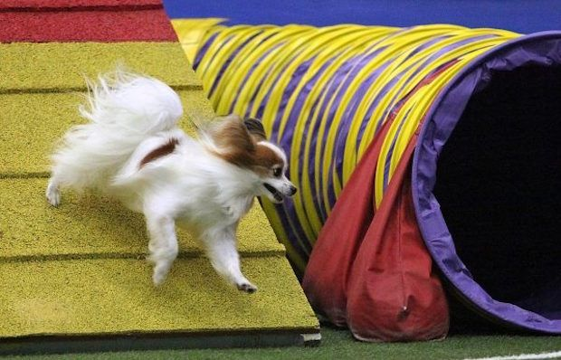 Dog Sports 101: Pick a Sport for Your Pup to Play #dogs http://buff.ly/2kCX4vM