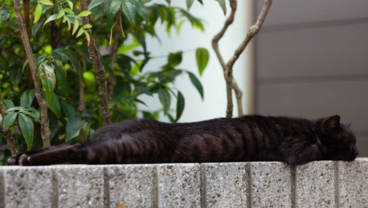 Cat stretches out on a wall on Cat Island