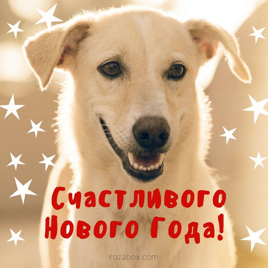 Поздравление любимой собаке с новым годом
