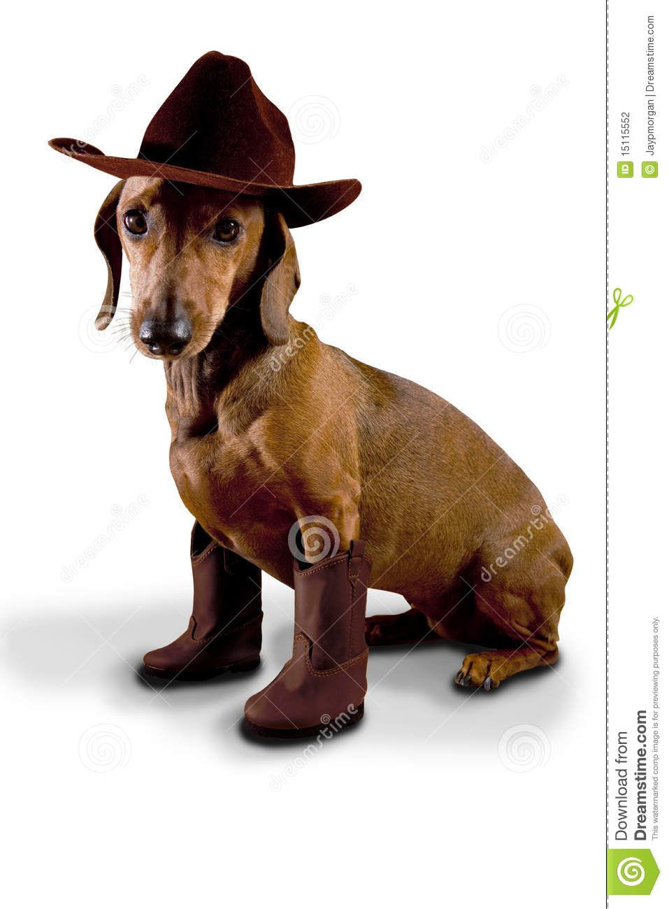 Why Did The Cowboy Adopt A Dachshund Because He Wanted A Little