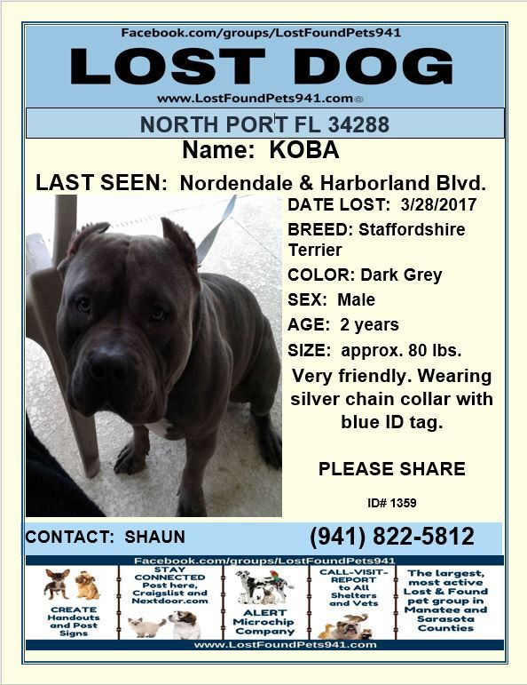 Have You Seen Koba Losing A Dog Staffordshire Terrier Manatee County