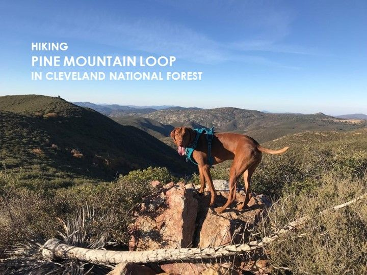 Dog friendly hiking pine mountain loop in cleveland