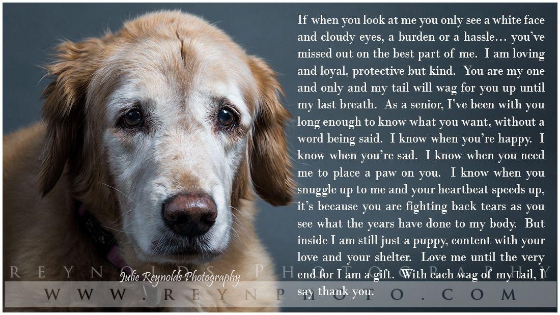 Pets Dog Poems