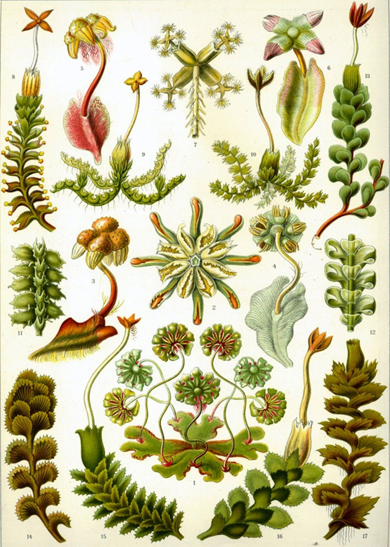 Ernst Haeckel-biologist, naturalist, physician and artist.