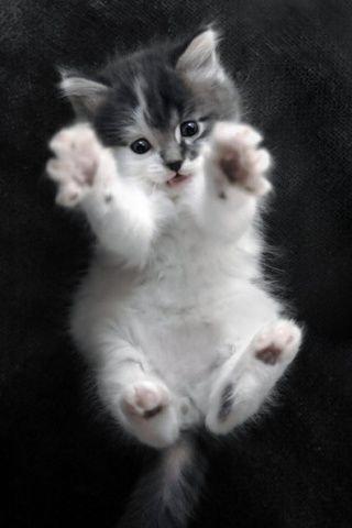 Oh Hi Rawr Cute Animals Kittens Cutest Cute Cats
