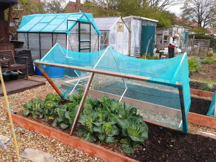 Netting Frame For Cabbages With Images Garden Netting Modern