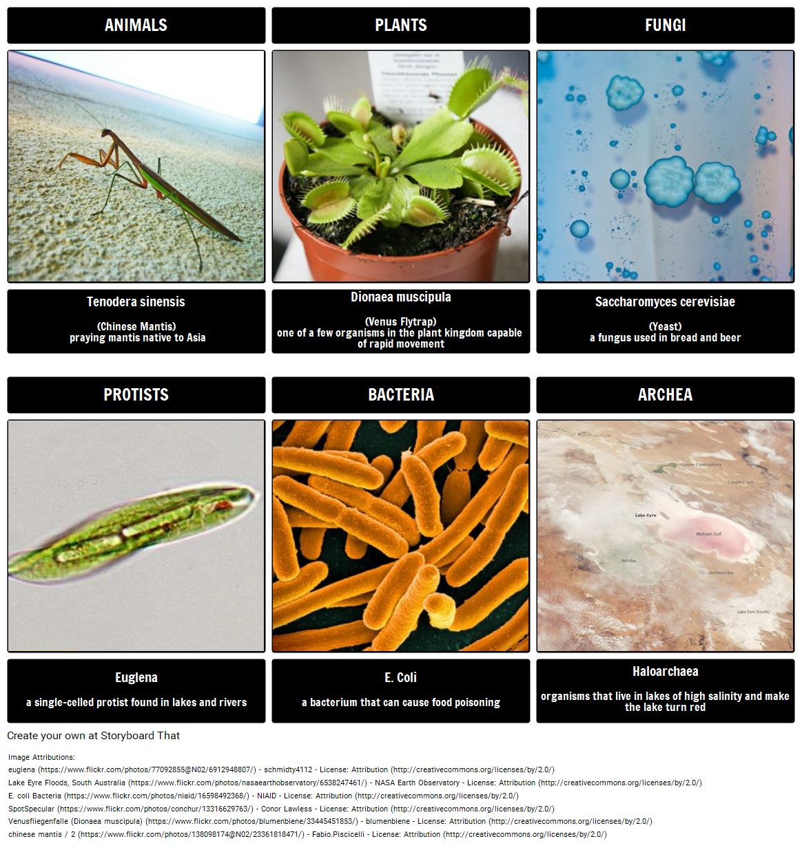 protist study guide Ebook - pdf read ebook pdf protist and fungi study guide online protist and fungi study guide many people may have different reason to read some books.