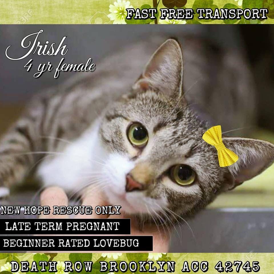 catsrangels2 🐈🌸🌷🐶🍂 ️🍁 on Twitter Cats, Animals, Cat adoption