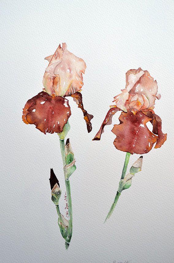 Iris, aquarelle plein air, Cécile Van Espen, 36 x 48 cm, papier 100% coton, grain torchon, 300 g/m2, 11 mai 2016