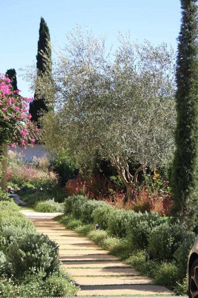 Main Entrance Walkway With Cypress Olive Tree Coastal