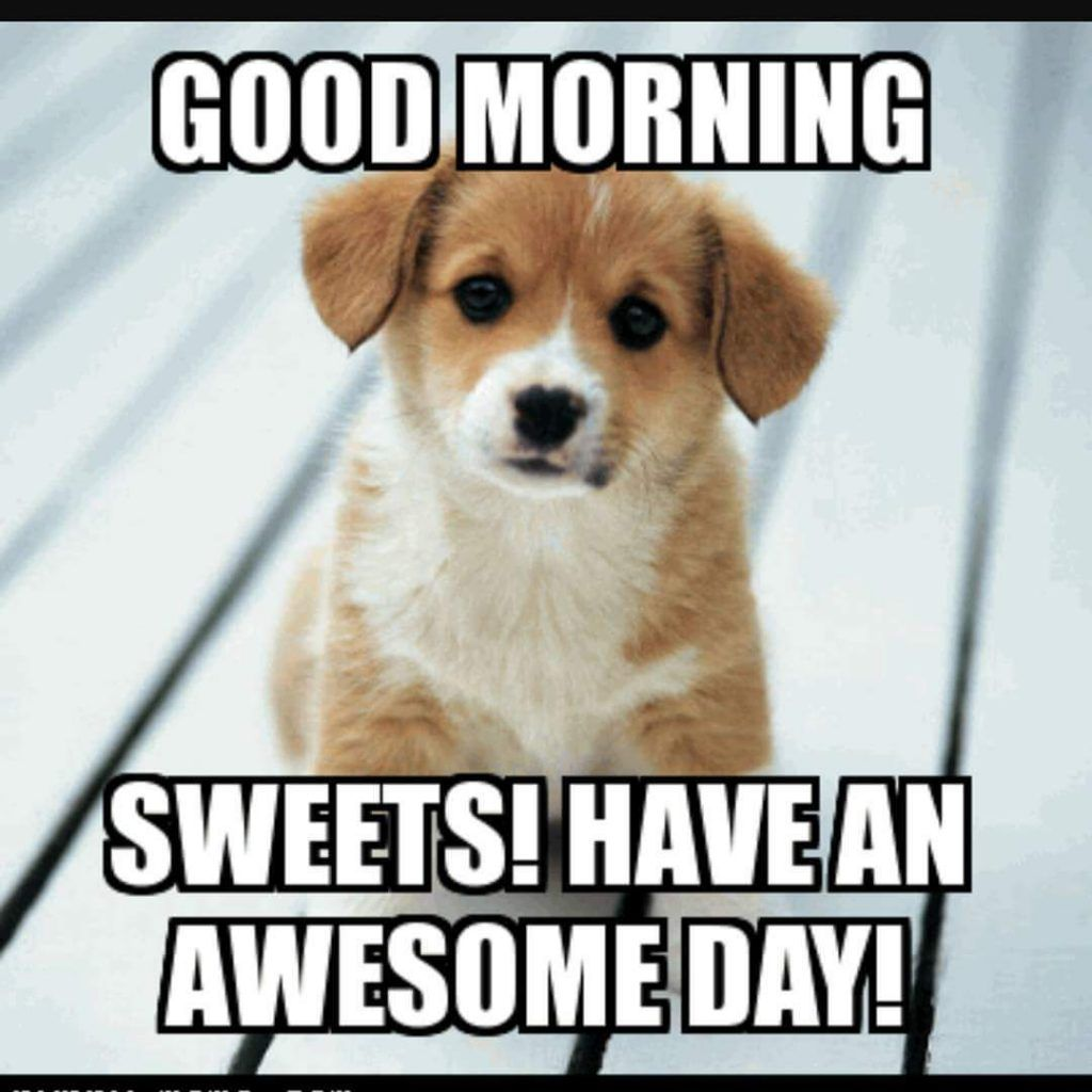 Good Morning Meme Puppy Funny Good Morning Memes Morning Memes Good Morning Funny