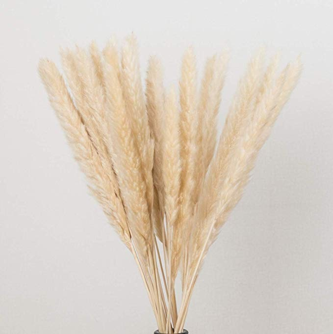 Amazon Com Dongliflower Natural Dried Pampas Grass Small Reed Plumes Wedding Flower Bunch 24 Tall For Home Decor Light Pampas Grass Bunch Of Flowers Pampas