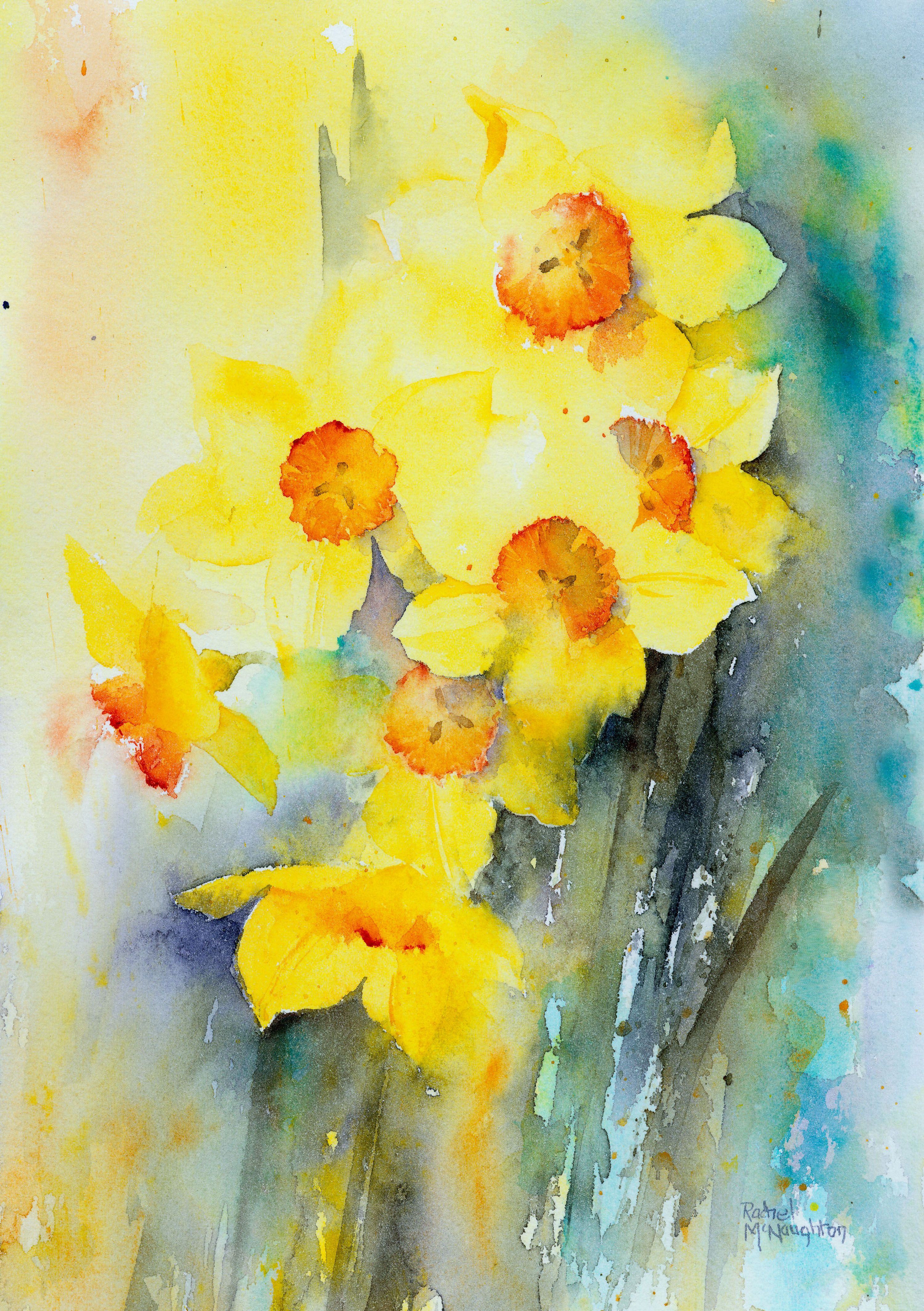Cheerful yellow narcissus painted in watercolour