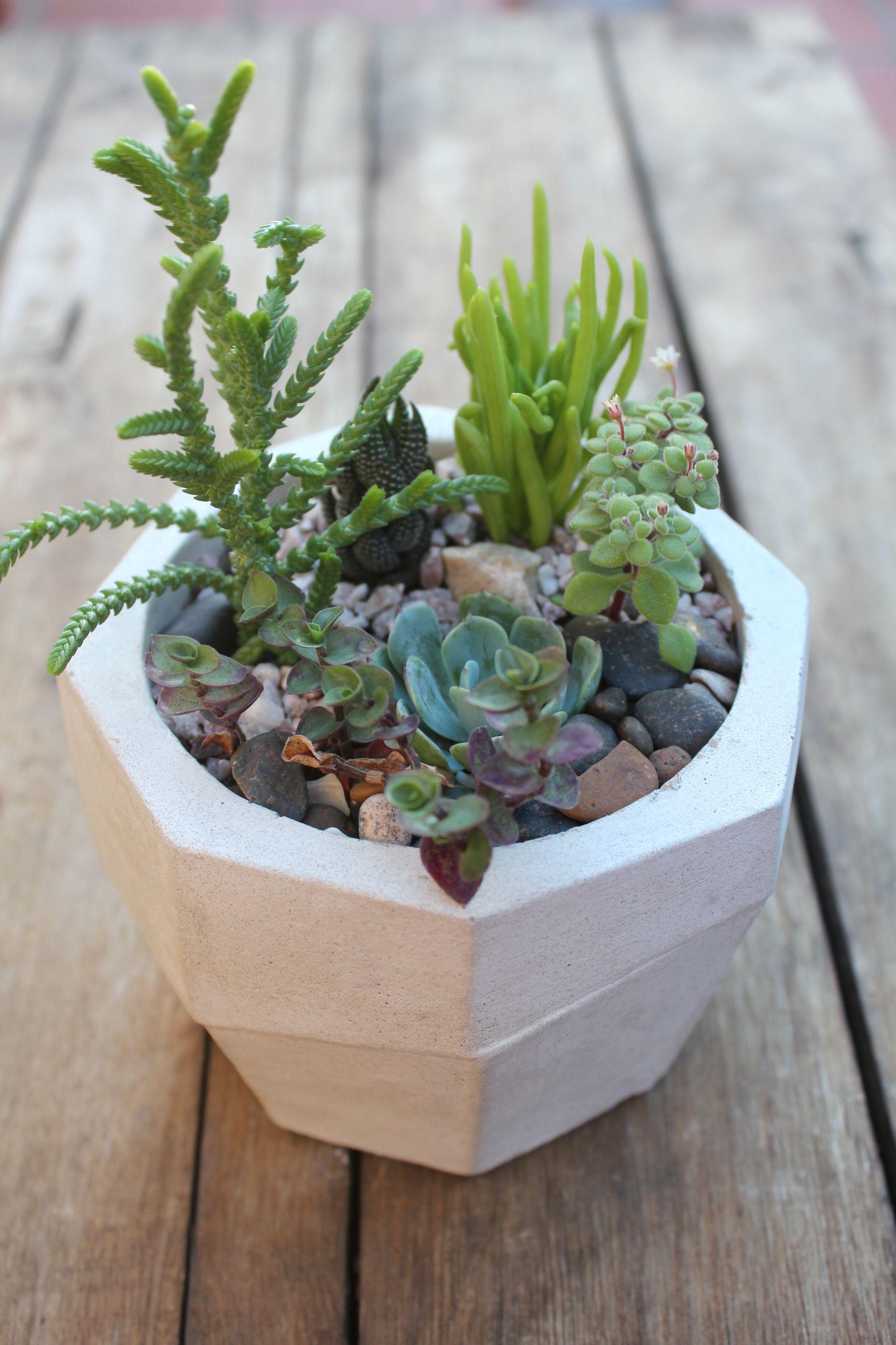Maceta cemento cactus terrario jardin macetas for Macetas para jardines pequenos