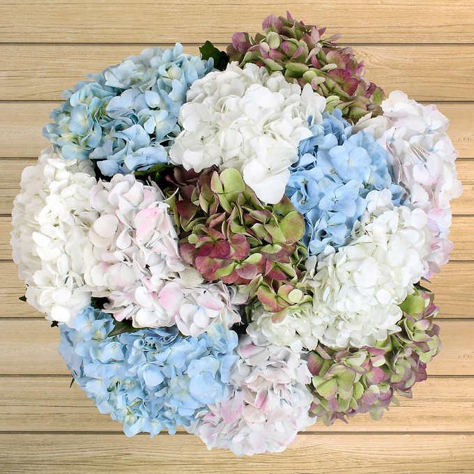 24 Stem Hydrangeas Wedding Flowers Box Wedding Flowers Hydrangea Flower Bouquet Wedding