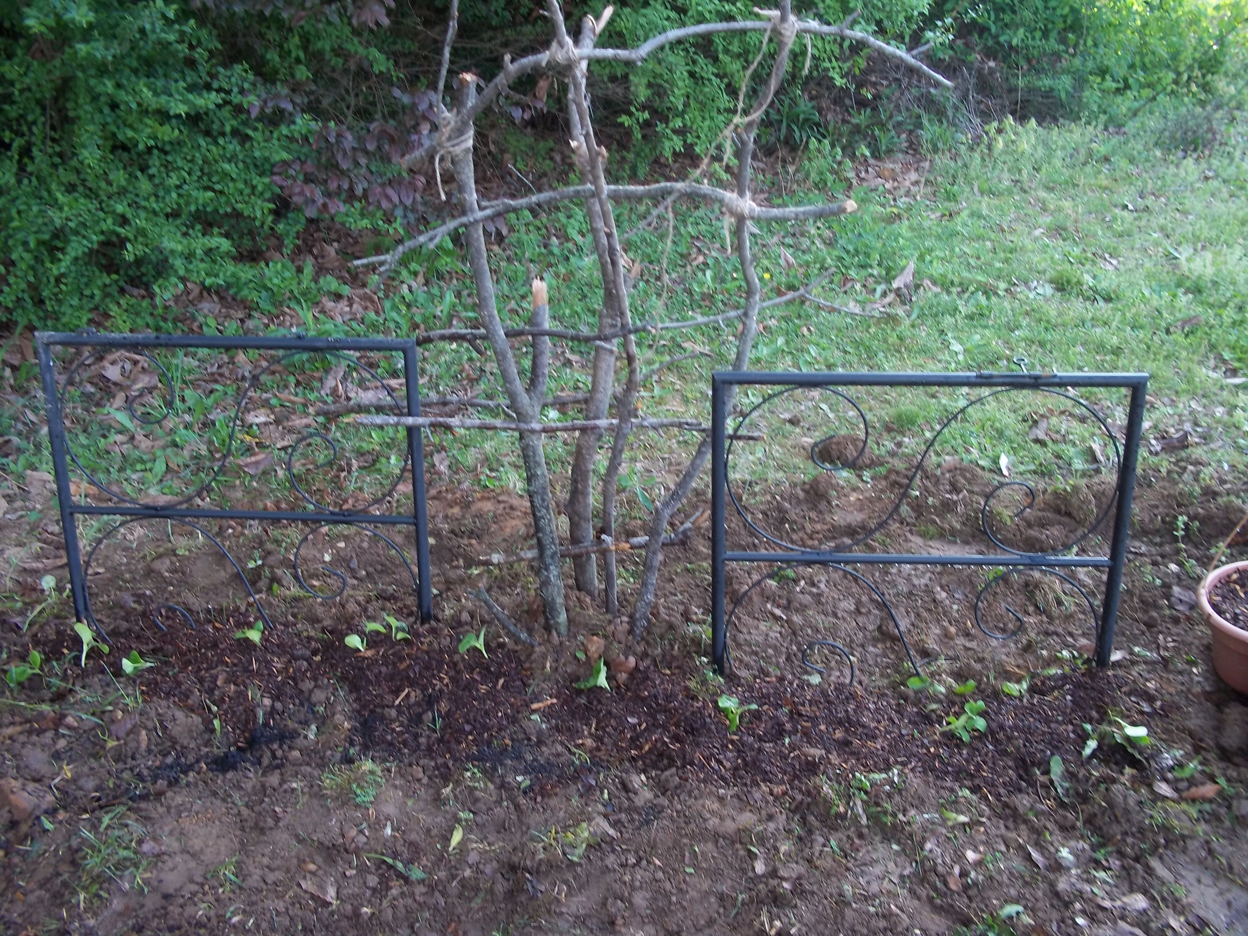 I made this trellis out of sticks I found laying around