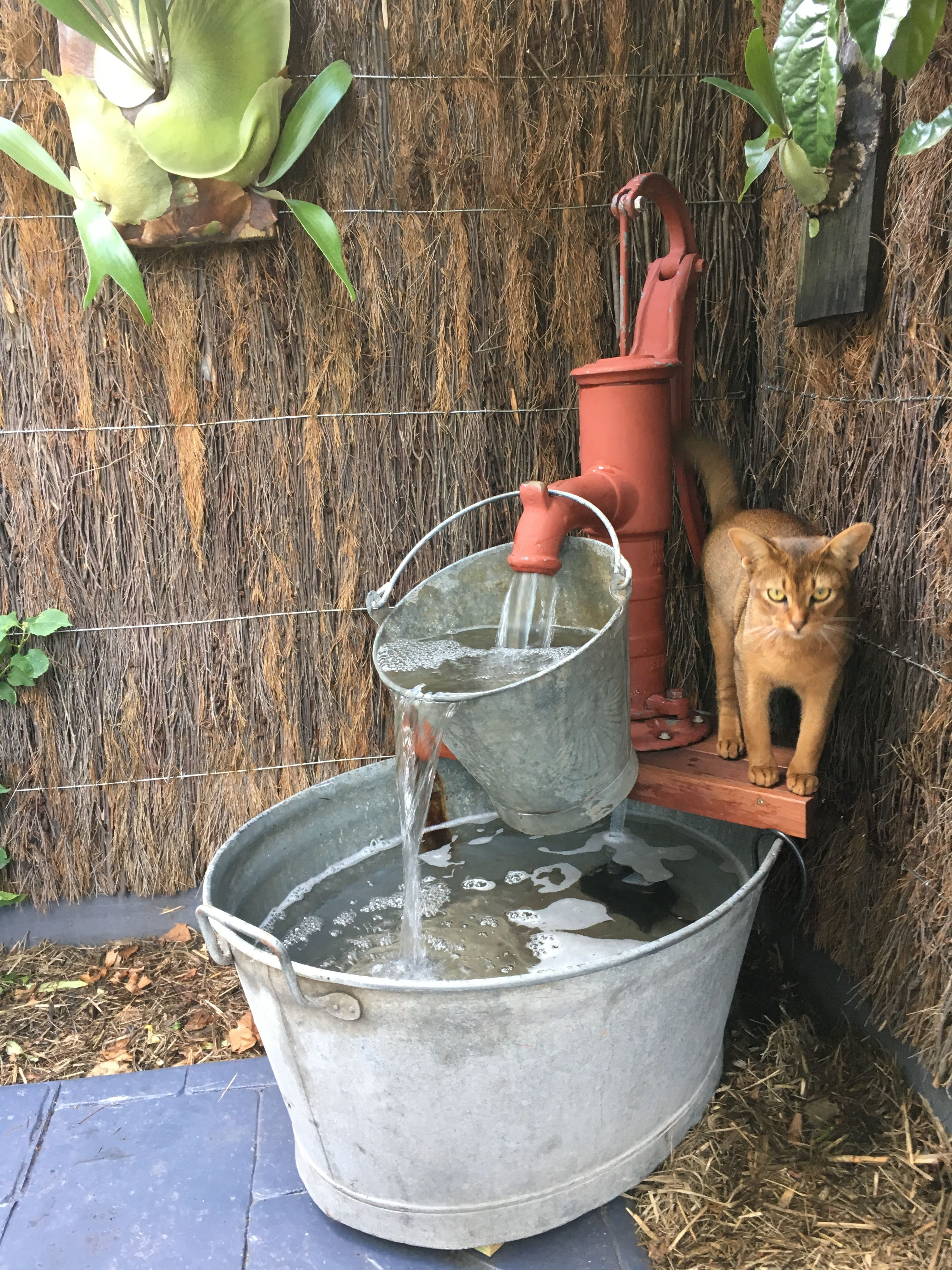 Water Fountain With Old School Water Pump Bucket And Wash