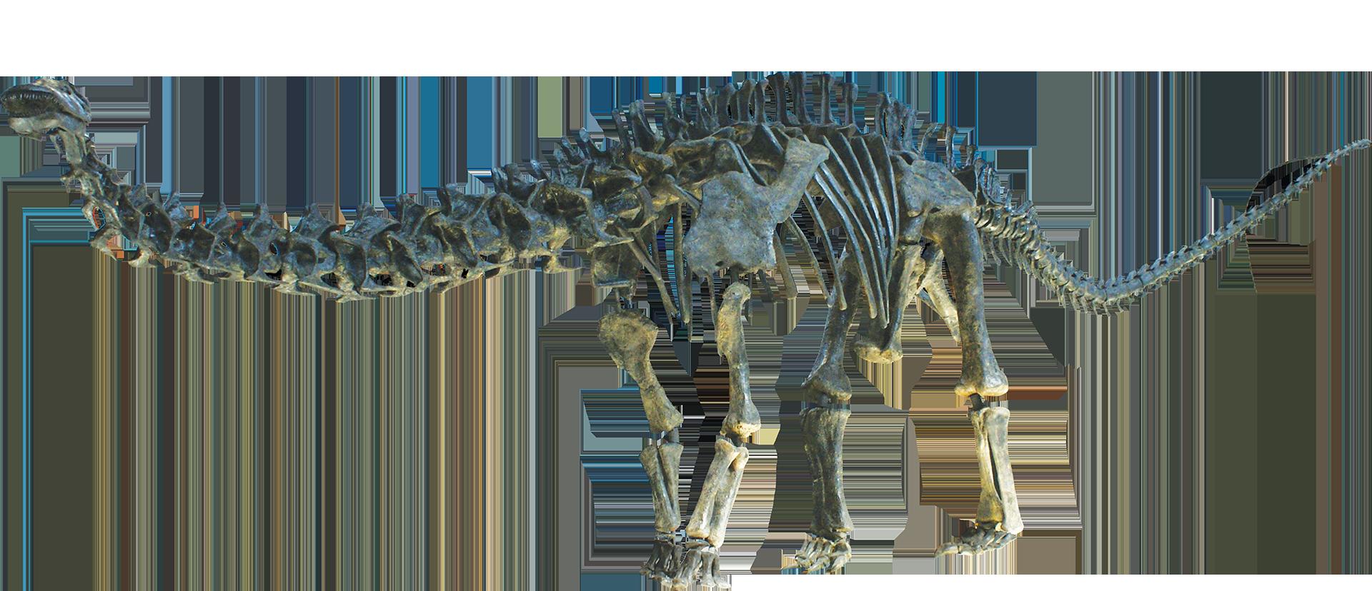Apatosaurusclean Png 1920 828 Dinosaur Dinosaur Skeleton Paleontology