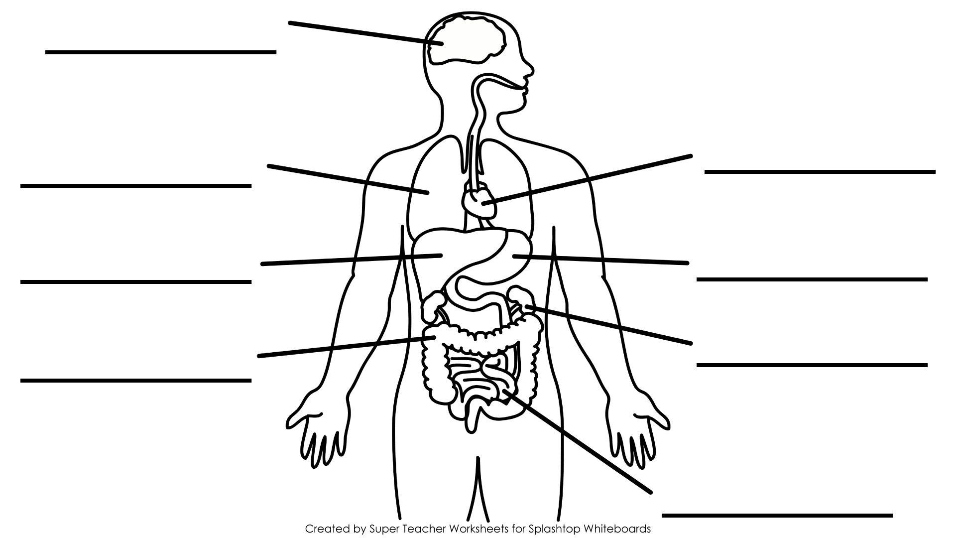 Simple Human Body Diagram