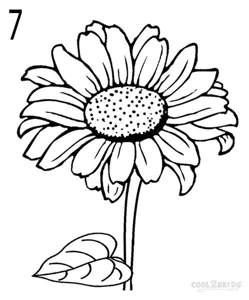 Line Art Sunflower : How to draw a sunflower step drawings pinterest