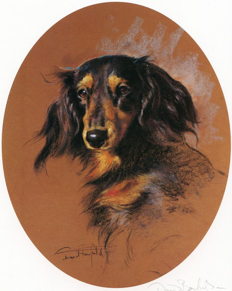 Dachshund Longhaired Long Haired Daxi Dog Fine Art Limited Edition