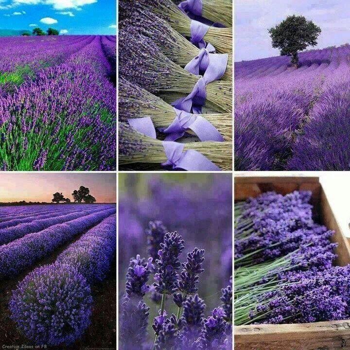 If you like purple