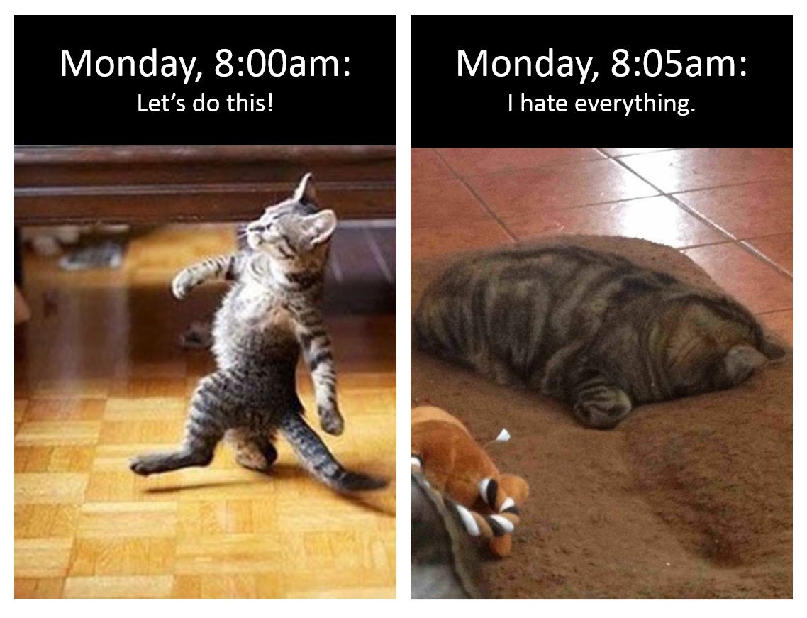 Every. Single. Monday. | Funny, Funny animals, Snarky humor