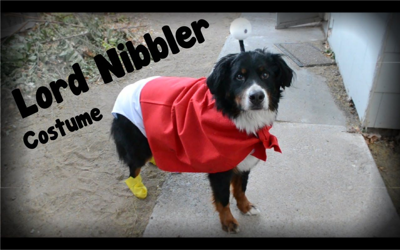 Puppy Lord Nibbler Futurama Costume Diy Cheap Easy Fast Dog Costumes Dog Costume Dogs