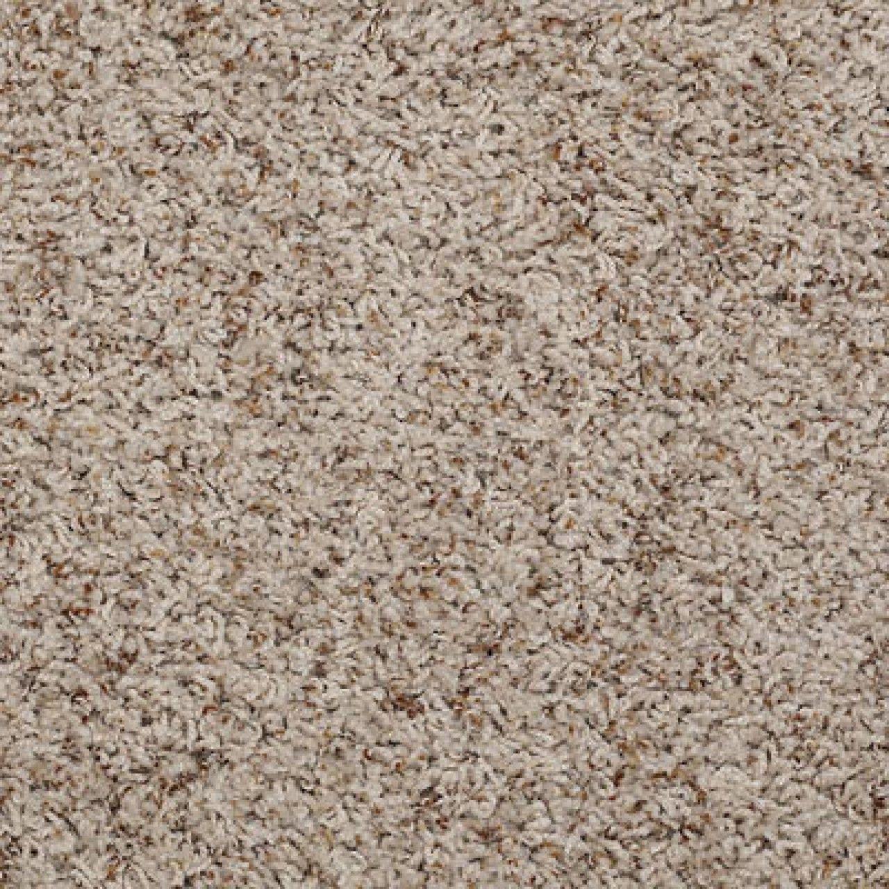 Shaw Anso Nylon Carpet Colors Vidalondon