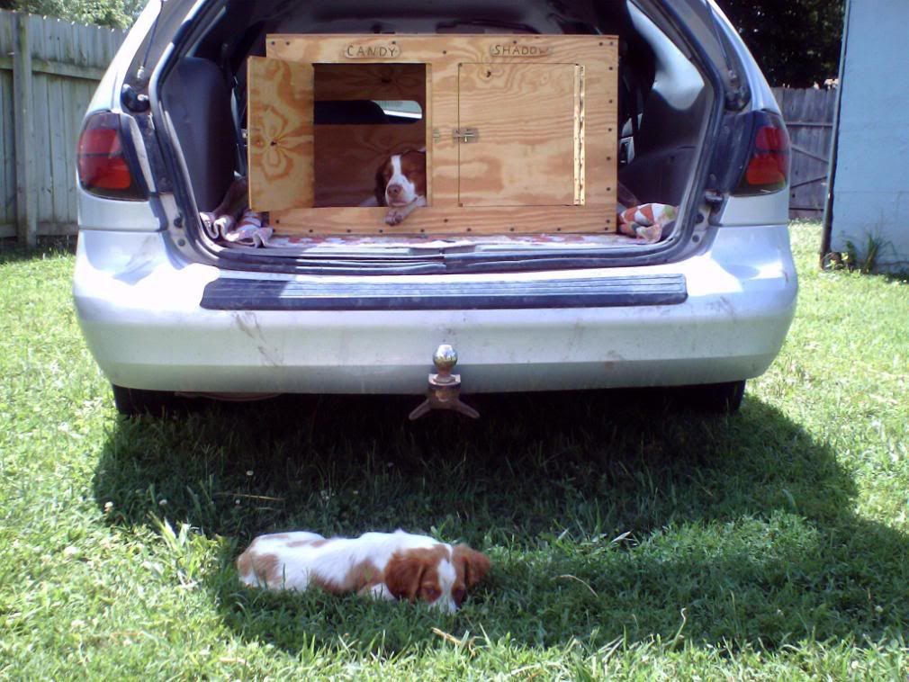 plywood dog boxes Google Search Dogboxes Pinterest Dog