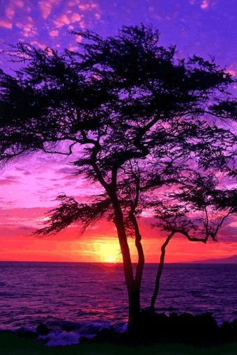 ✯ Sunset Beach and Tree