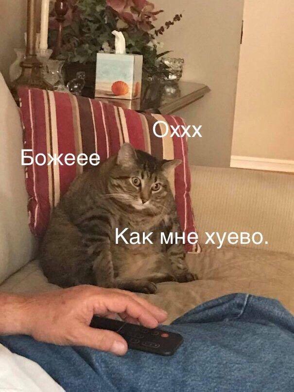 Пин от пользователя Пупок на доске Мемы (с изображениями ...