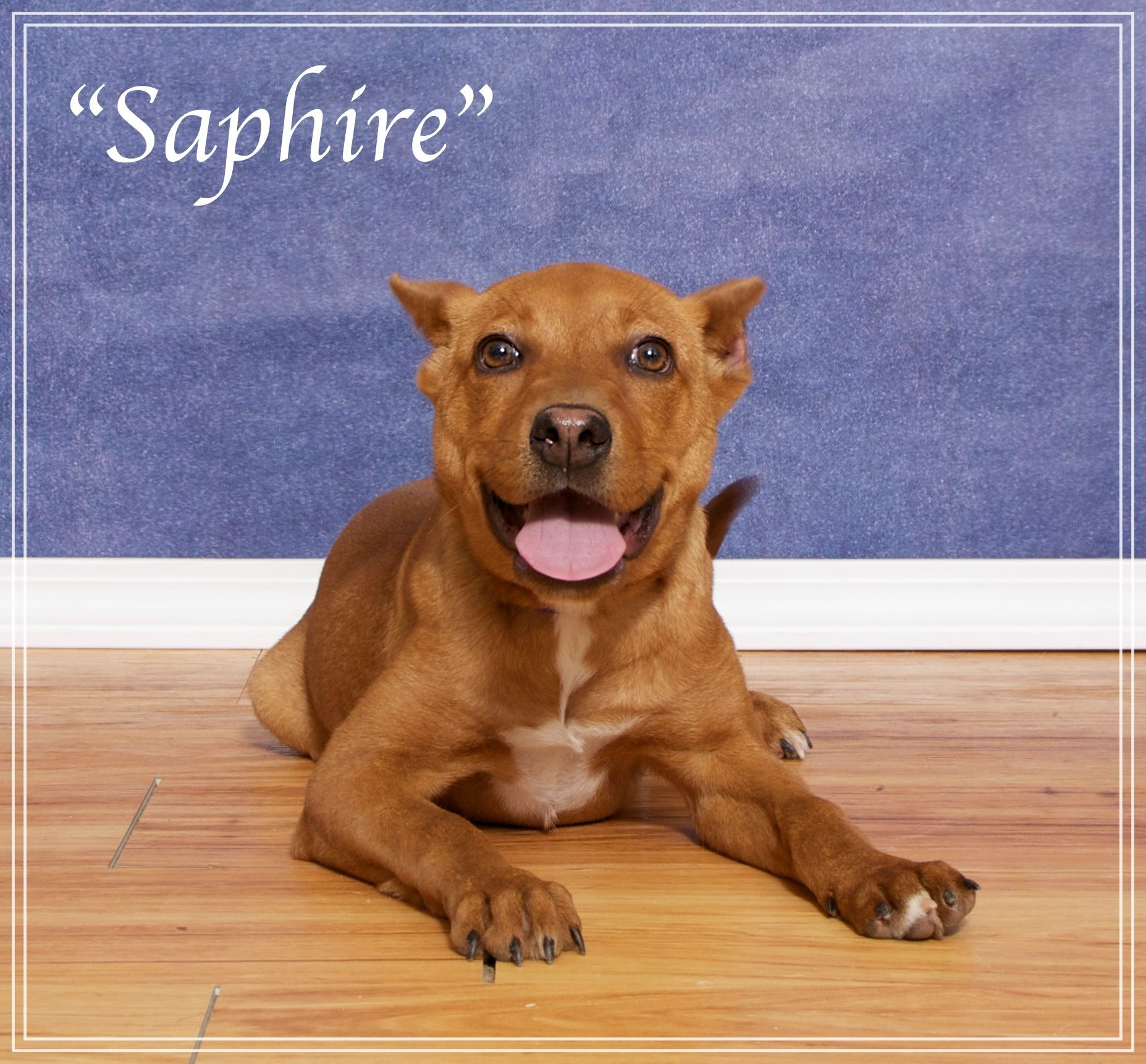 Saphire Is An Adoptable Dog Terrier Mix Searching For A Forever