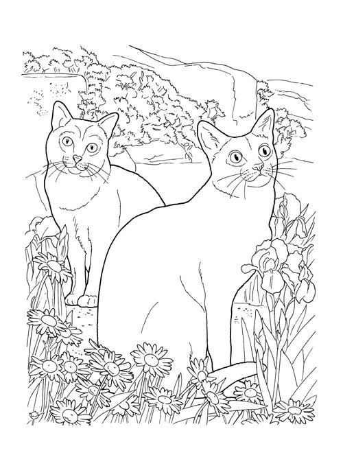 The Cat Lovers Coloring Book For Adult My Lovely By 70eastbooks